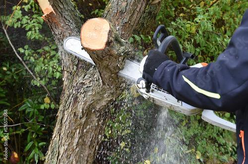 Baum fällen Poster