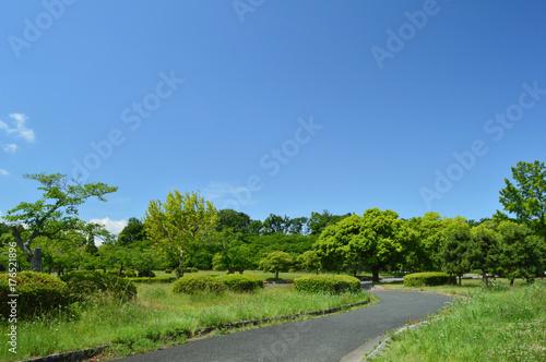 公園の空と森と道 Poster
