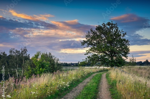 Foto op Plexiglas Blauwe jeans Beautiful summer landscape. Rural road among green grasses and beautiful colorful sky in the background.