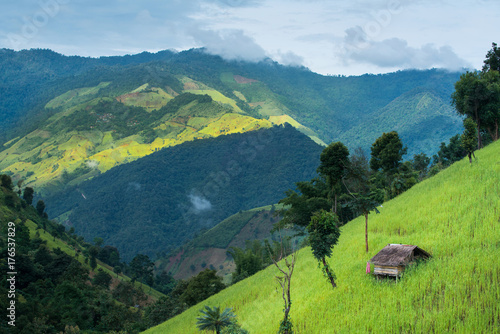 Aluminium Rijstvelden Green Terraced Rice Field mountain and small hut, nature landscape