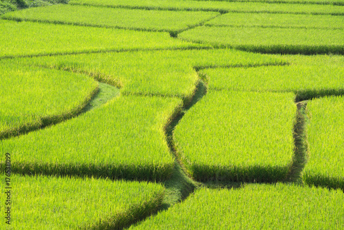 Papiers peints Vert chaux Green Terraced Rice Field in Nan, Thailand.