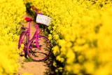 pink bike in the field of rape - 176540260