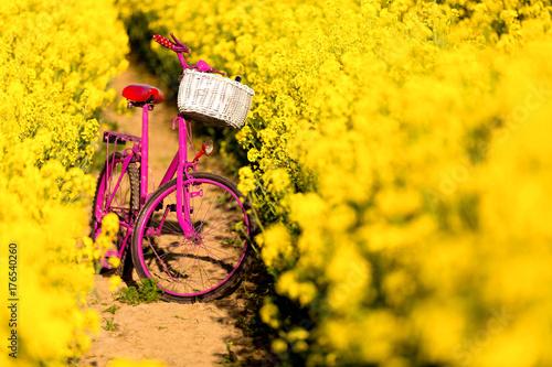 Tuinposter Fiets pink bike in the field of rape