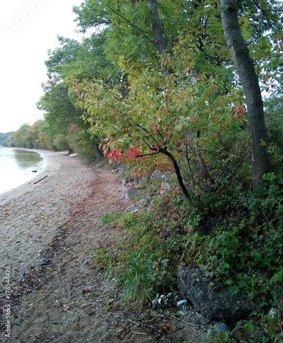 Herbstbaum am Chiemseestr