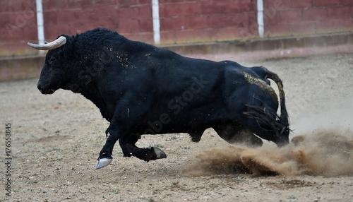 Fotobehang Bison bull