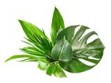 various tropical leaves - 176560000