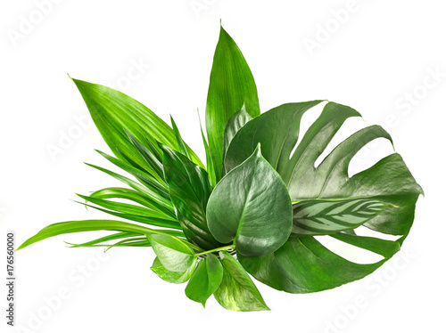 różne tropikalne liście