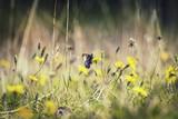 Wild Flower Meadow - 176570489