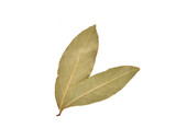 Dried bay leaves - 176575233