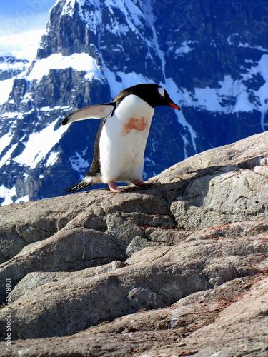 Fotobehang Pinguin Antarctica