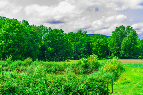 Fotobehang Lente Green field, landscape of meadow with grass Upstate New York