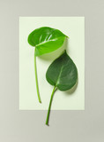tropical leaves on grey background - 176592819