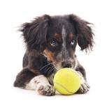 Dog with ball.