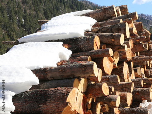 logs in the mountains in winter with snow Poster