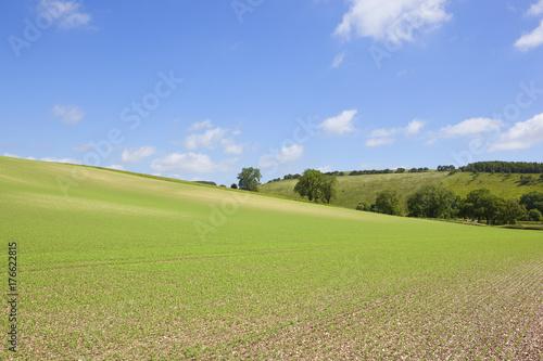 Fotobehang Pistache hillside pea field