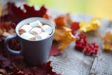Autumn cocoa with marshmellows - 176628470