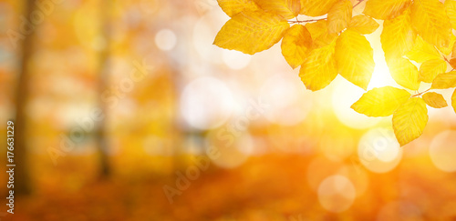 Autumn leaves on sun Poster