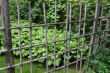 Fence in a Japanese garden - 176636695