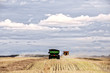 Two harvesters and a grain cart combining swaths of canola seed in a cloudy rural countryside landscape