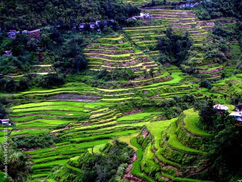 Keuken foto achterwand Rijstvelden Philippines