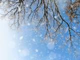 schneebedeckte Winterlandschaft - 176672036