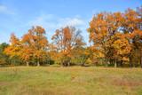 Autumn in the oak grove - 176684869