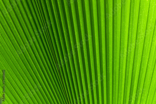 Lines and textures of Green Palm leaves Poster