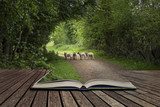Beautiful young Spring lambs playing in English countryside landscape concept coming out of pages in open book - 176689430