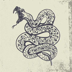 Hand drawn snake illustration on grunge background.