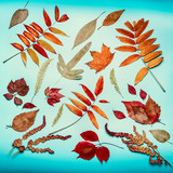 Autumn leaves composing on turquoise blue background, top view, flat lay - 176693426