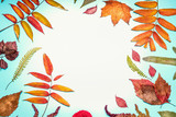 Beautiful autumn seasonal composing or pattern made with various colorful  dried fall leaves on  turquoise blue background, top view , frame - 176693467