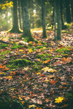 Forest floor in vivid colors during autumn