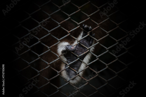 monkey feet holding in a cage Poster