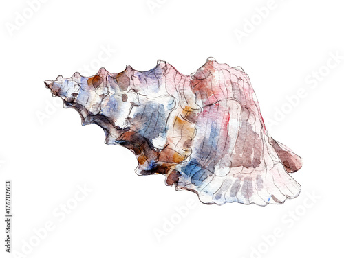 The seashell, watercolor illustration isolated on white background. - 176702603