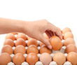 Person choosing the best egg from a carton of eggs.