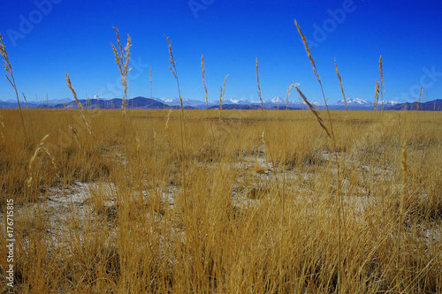 Papiers peints Bleu fonce background with beautiful autumn grass