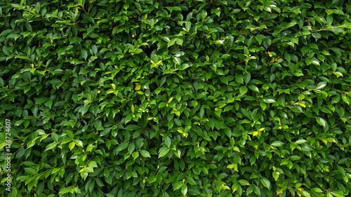 Aluminium Textures Green leaf wall texture