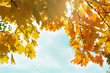 texture of autumn leaves and branches, autumn concept, seasonality - 176725050