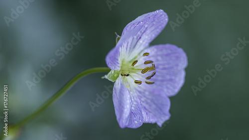 Fotobehang Iris foto natura