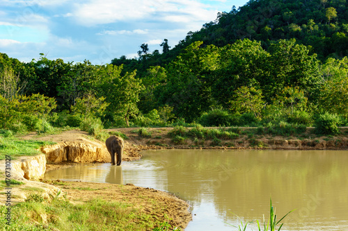 Póster beautiful amazing scene of one large wild elephant is standing and is going to swim in a large pool inside a national park with blue sky and cloud