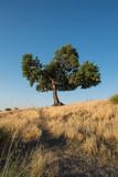 Lone tree in the Sierra Tejeda, Spain - 176739410