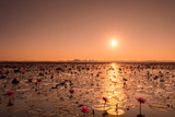 Sunrise over the pond of lotus water lily - 176744879