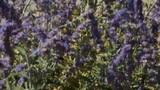 Lavender rack focus - 176750432