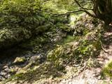 rami, alberi, bosco - 176758815