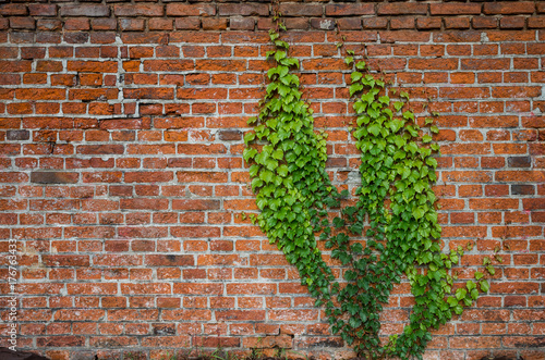Papiers peints Brick wall Vintage red brick wall background overgrown with ivy