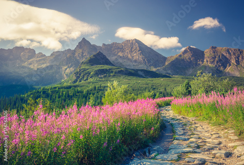 Fotobehang Nachtblauw Tatra mountains, Poland landscape, colorful flowers in Gasienicowa valley (Hala Gasienicowa), summer tourist trail