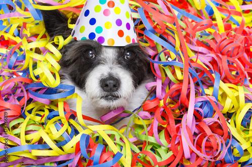 Papiers peints Chien de Crazy party celebration dog