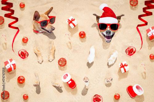 Papiers peints Chien de Crazy merry chtristmas dogs at the beach