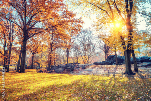 Foto Murales Central park in New York City at autumn morning, USA