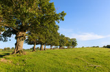 Row trees in landscape - 176779028